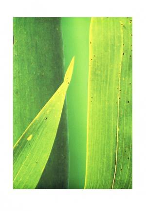 Комплект фотоштор ТОМДОМ. Цвет: разноцветный