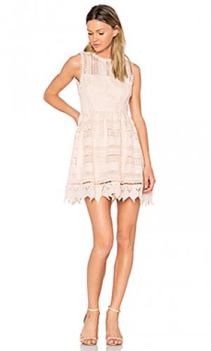 Платье elissa BB Dakota. Цвет: румянец