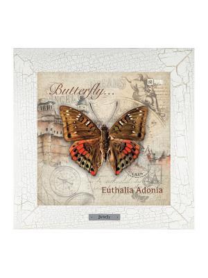 Картина-сувенир Euthalia Adonia Ceramic Picture. Цвет: бежевый