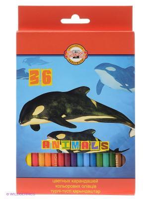 Набор карандашей Животные (36 цветов) Koh-i-Noor. Цвет: синий