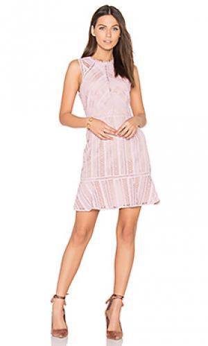Кружевное платье kimmy Greylin. Цвет: розовый