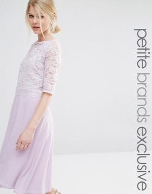 John Zack Petite Короткое приталенное платье с кружевным топом и рукавами Pet. Цвет: фиолетовый