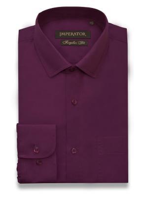 Рубашка Imperator. Цвет: сливовый