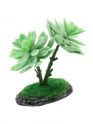 Растение Граптоверия 150мм. REPTI-ZOO. Цвет: зеленый