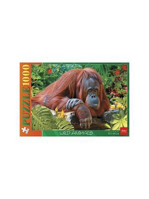Пазл 1000 элементов  -Орангутанг- Издательство Хатбер-пресс. Цвет: зеленый