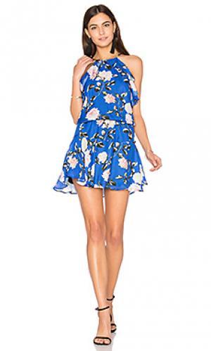 Мини платье с принтом lulu Karina Grimaldi. Цвет: синий