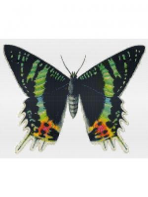 Алмазная мозаика Бабочка Урания Цветной. Цвет: белый