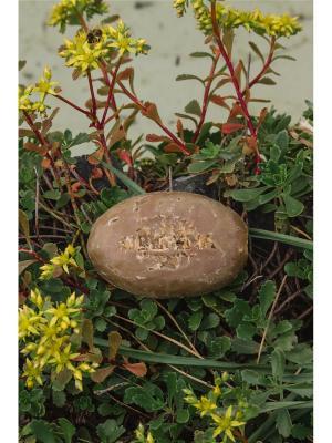 Натуральное мыло Медовое Siberina. Цвет: коричневый