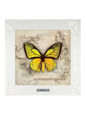 Картина-сувенир Ornithoptera goliath Ceramic Picture. Цвет: бежевый
