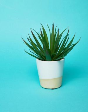 Sass & Belle Белый глазированный мини-горшок для растений. Цвет: мульти