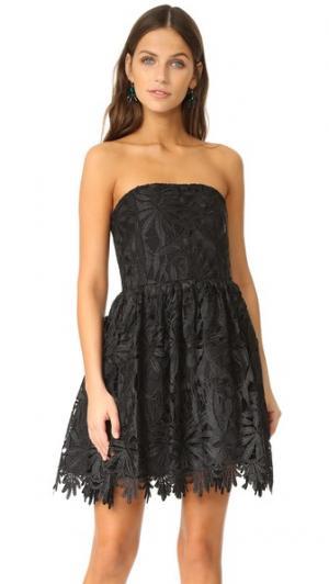 Нарядное платье Daisy alice + olivia. Цвет: голубой