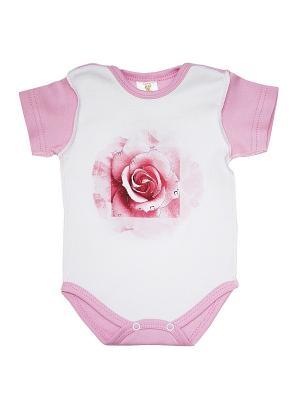 Боди КОТМАРКОТ. Цвет: розовый, белый