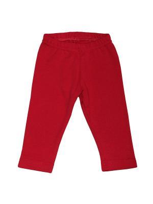 Леггинсы NewBorn. Цвет: красный, бордовый
