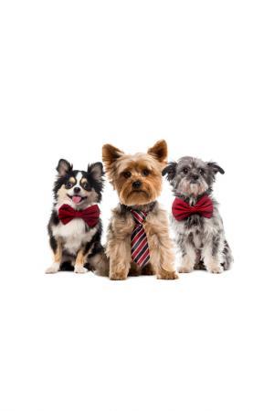 Холст Собаки в галстуке Ecoramka. Цвет: бежевый, серый
