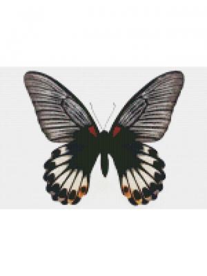 Алмазная мозаика Бабочка Большой Мормон Цветной. Цвет: белый