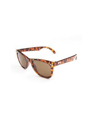 Солнцезащитные очки Appaman. Цвет: коричневый