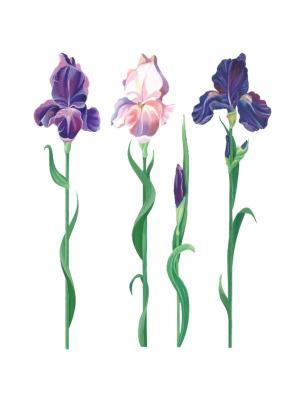 Виниловые наклейки Ирисы, 4 шт DECORETTO. Цвет: зеленый, фиолетовый, розовый