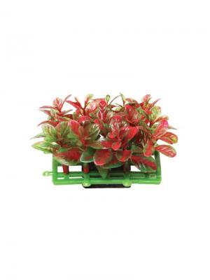 Растение для аквариума Коврик 6.8x4.3см. LAGUNA. Цвет: зеленый, красный