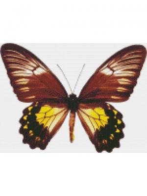 Алмазная мозаика Малайская бабочка Цветной. Цвет: белый