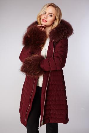 Приталенный бордовый женский пуховик  с мехом енота AFG. Цвет: бордовый