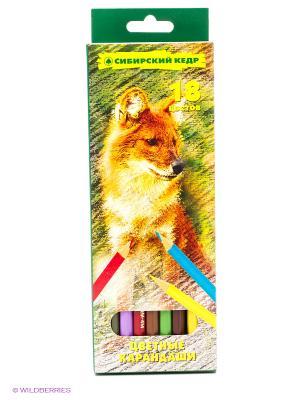 Карандаши СКФ. Цвет: зеленый