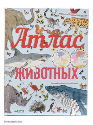 Атлас животных Издательство CLEVER. Цвет: голубой