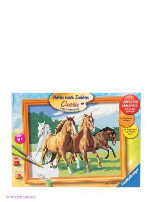 Набор для рисования Раскрашивание по номерам Дикие лошади Ravensburger. Цвет: коричневый, зеленый, серый