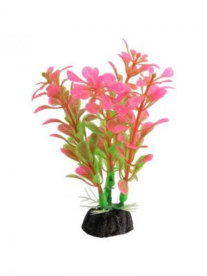 Растение аквариумное Альтернатера 100мм розовая. LAGUNA. Цвет: зеленый