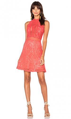 Кружевное платье arella Rebecca Taylor. Цвет: красный