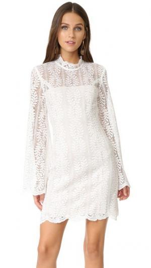 Кружевное мини-платье Uptown Keepsake. Цвет: золотой