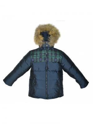 Куртка BORELLI. Цвет: синий