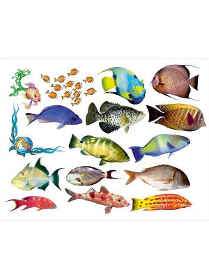 Легкосъемная наклейка Океанические рыбки Оранжевый Слоник. Цвет: синий,зеленый,красный