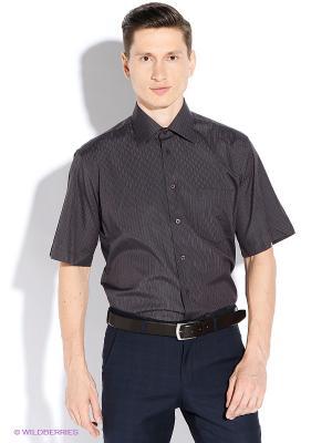 Рубашка Conti Uomo. Цвет: сливовый, черный