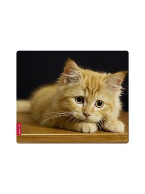Коврик для мыши Speedlink SILK, Baby Cat. Цвет: черный, рыжий
