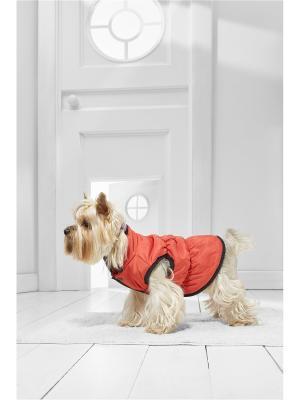 Теплый жилет на кнопках для маленьких пород собак весом 3-8 кг и длиной спинки 30-35 см Nothing but Love. Цвет: красный, оранжевый, черный