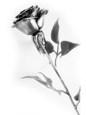 Роза Chic a loco. Цвет: светло-серый