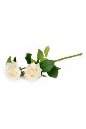 Роза EDG. Цвет: белый