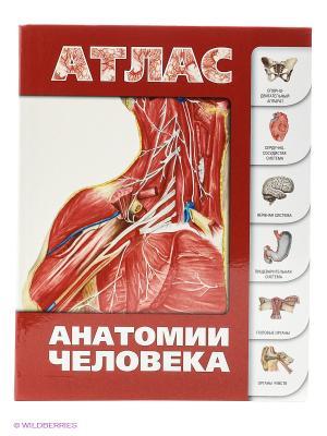 Атлас анатомии человека Издательство АСТ. Цвет: красный