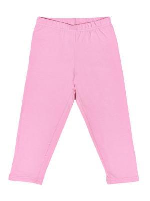 Капри МИКИТА. Цвет: розовый
