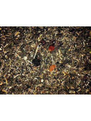 Иван-чай Монастырский. Цвет: сливовый, темно-бежевый
