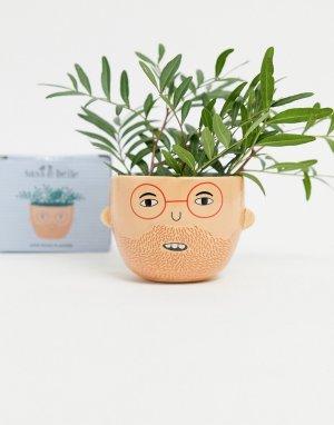 Маленький горшок для растений -Многоцветный Sass & Belle