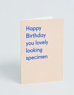 Открытка на день рождения с надписью lovely looking Ohh Deer-Мульти DEER