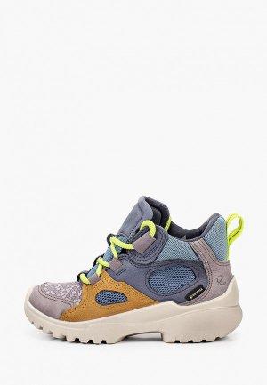 Ботинки Ecco XPERFECTION, шнурки 2 пары. Цвет: разноцветный