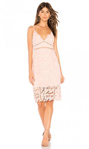 Кружевное платье botanica Bardot. Цвет: розовый