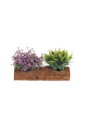 Интерьерное растение в горшке Creative. Цвет: зеленый